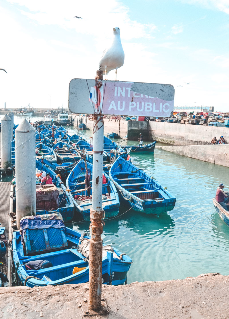 Port essaouira boats
