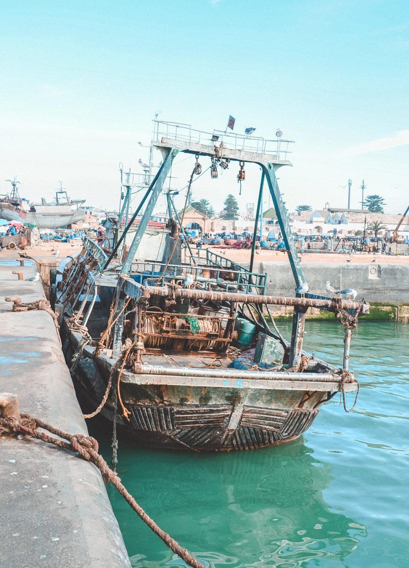 essaouira harbour fish
